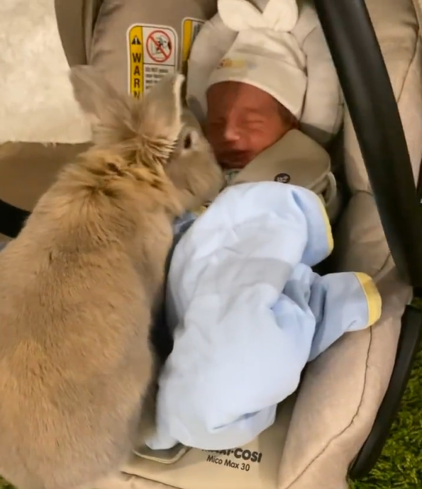 bunny sitting next to newborn baby in a car seat