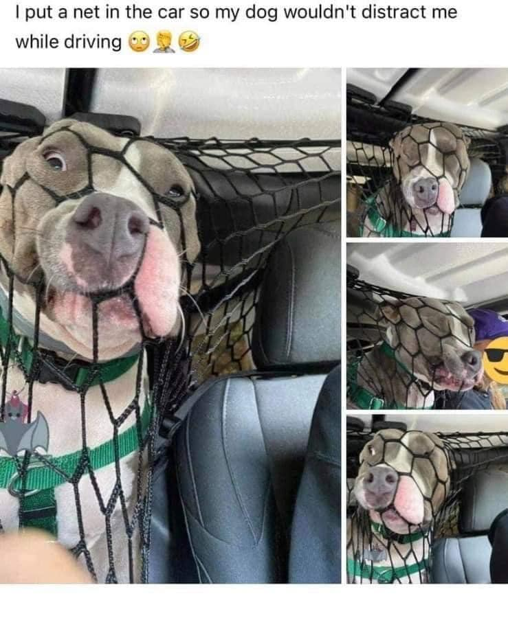 several images of a dog trying to get out of a net that is keeping him in the backseat of a car