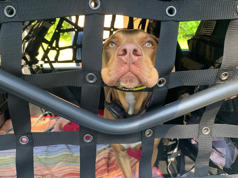 dog looking up through a net in the back of a jeep