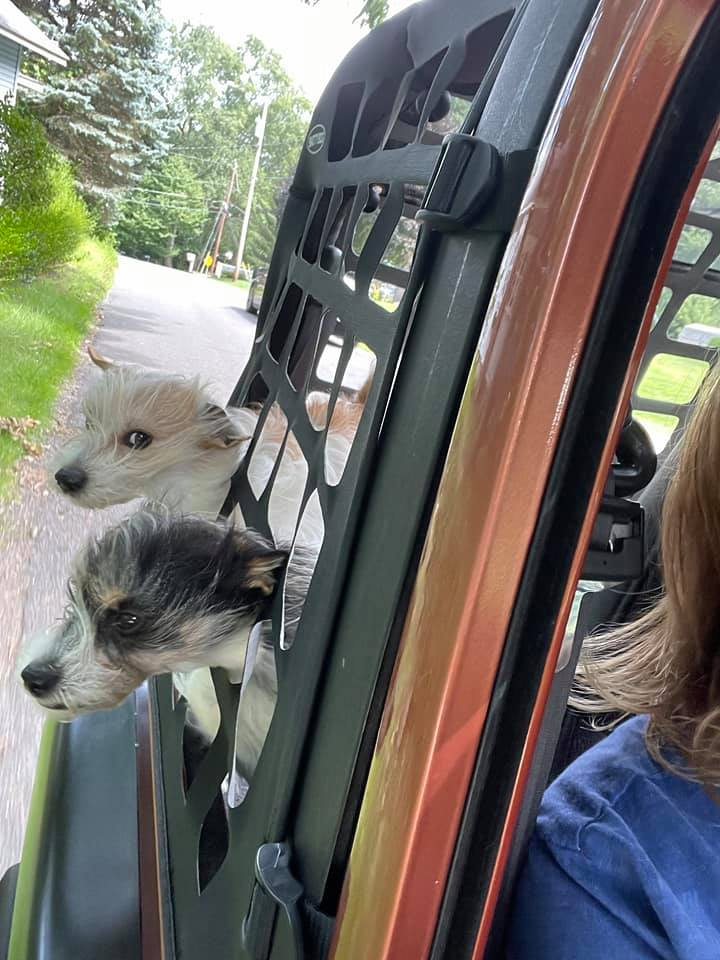 two dogs sticking their heads out of a car window and through a cargo net
