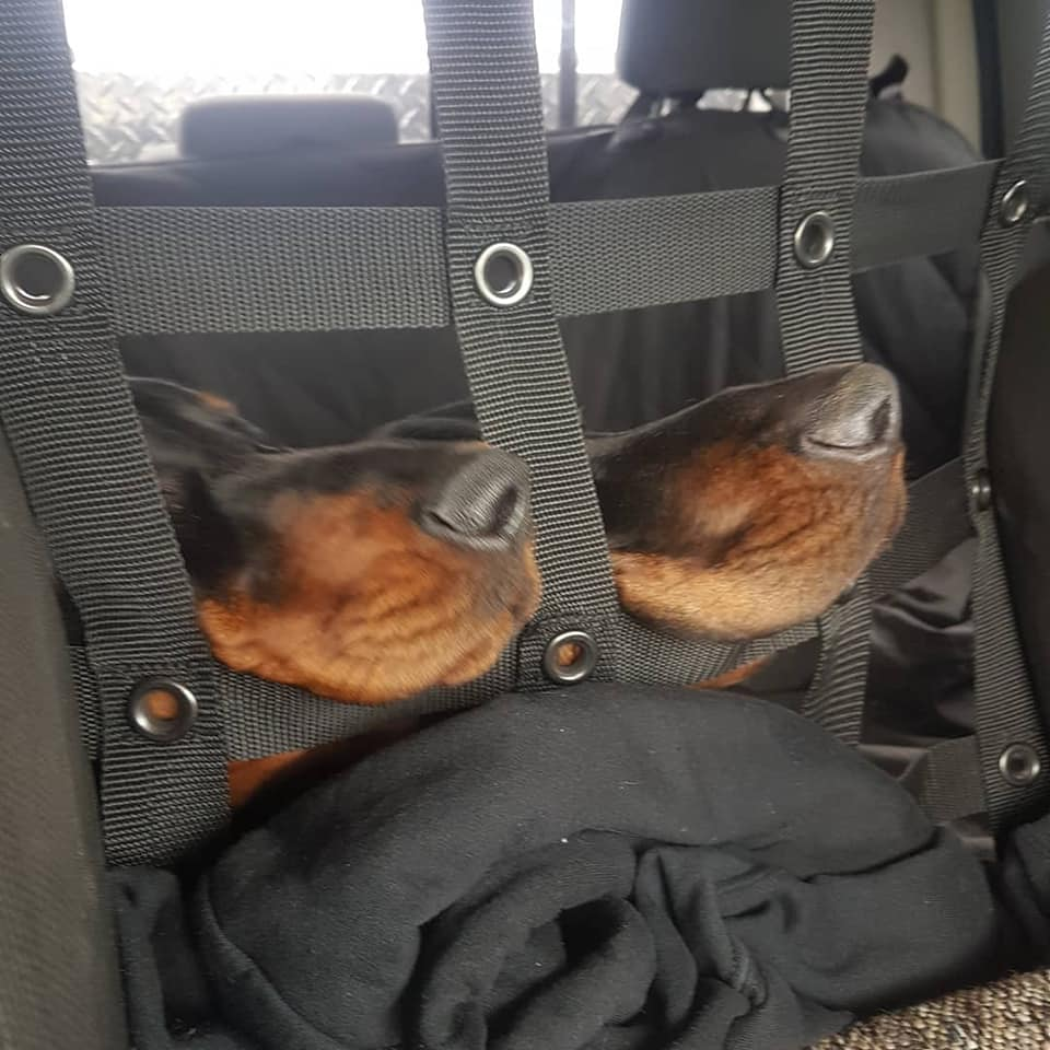 two hounds sticking their noses out of a cargo net