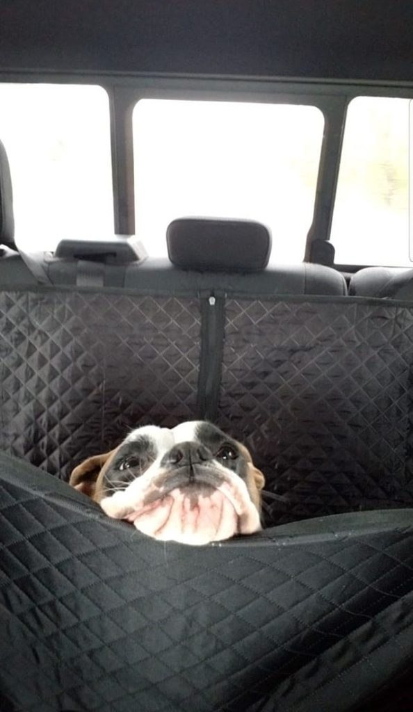 dog sticking its face above a barrier in the backseat of a car