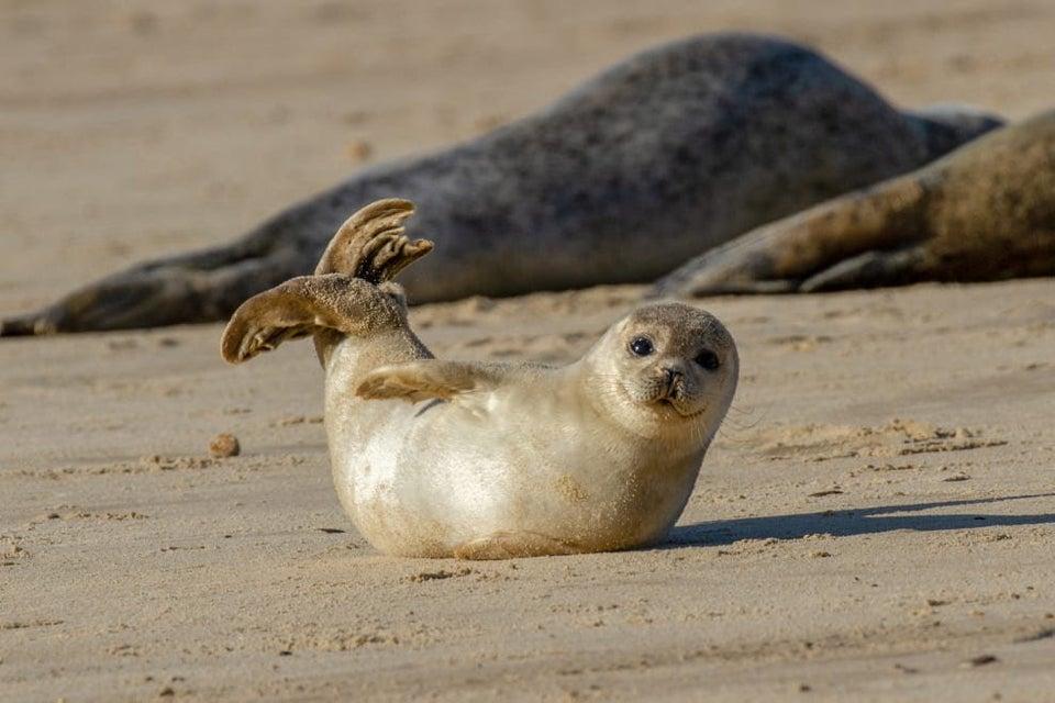 happy seal on beach