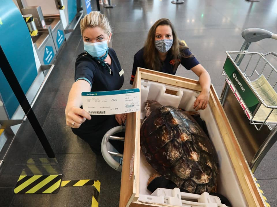 two women wearing masks and posing with a turtle who is in a crate