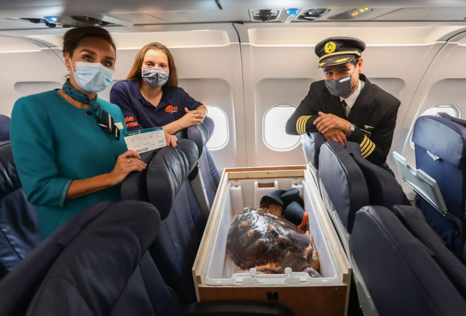 airplane captain and two women standing in front of airplane seats and posing next to a turtle in a crate