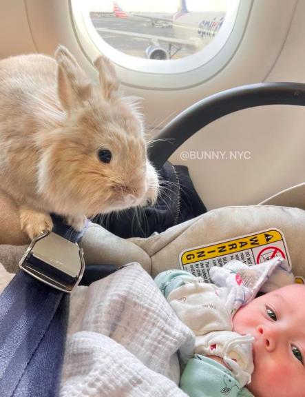 bunny watching over baby on plane