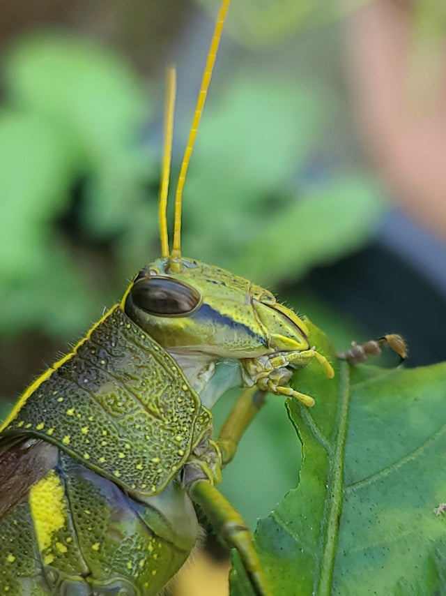 bird grasshopper up close