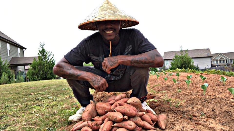 man in hat harvesting pile of sweet potatoes from garden