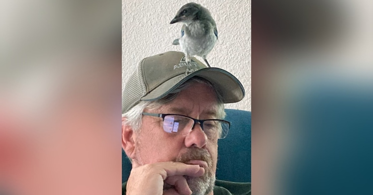 man wearing a hat and glasses looking down while a scrub jay stands on his head