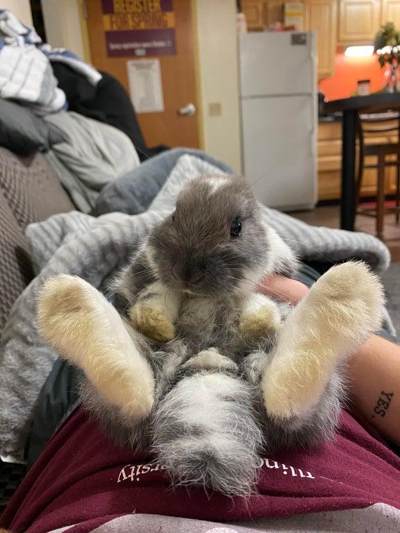 baby bunny with big back feet