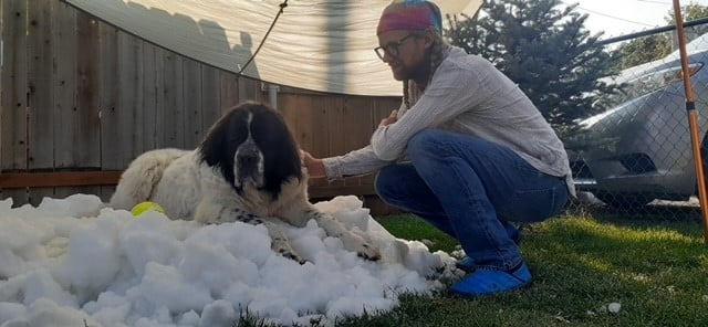 man kneeling down outside and petting a large dog who is on a large pile of snow