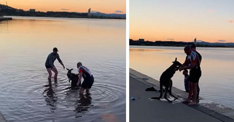two men pulling kangaroo from lake