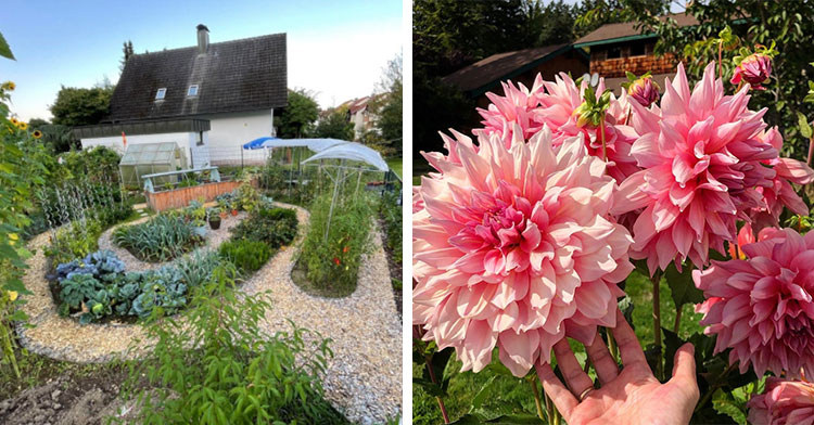 home with intricate garden out front next to giant pink flowers by someone's hand