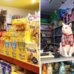 Cats who live inside a bodega
